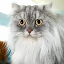 Голубой Пух  of Marvelous Stripe