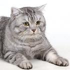 cat-0003