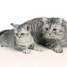 cat-012